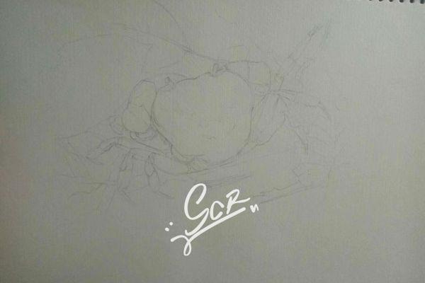某种溪蟹 - 水彩01 - 沈晨冉 - 医学插画师-动画师-阿杜的生物医学可视化社团作品