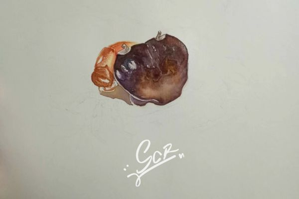 某种溪蟹 - 水彩02 - 沈晨冉 - 医学插画师-动画师-阿杜的生物医学可视化社团作品