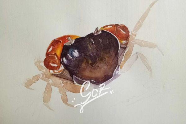 某种溪蟹 - 水彩03 - 沈晨冉 - 医学插画师-动画师-阿杜的生物医学可视化社团作品