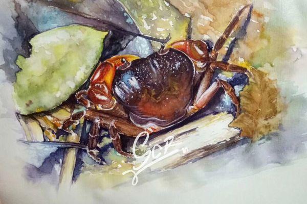 某种溪蟹 - 水彩04 - 沈晨冉 - 医学插画师-动画师-阿杜的生物医学可视化社团作品