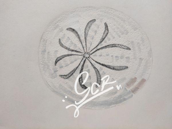 未知楯形目(某海胆)与蛇尾海星 - 水彩03 - 沈晨冉 - 医学插画师-动画师-阿杜的生物医学可视化社团作品