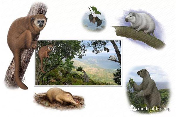 消失的远古加勒比海哺乳动物 Lost Ancient Mammals of the Caribbean 美国医学插画师协会 2018 沙龙展
