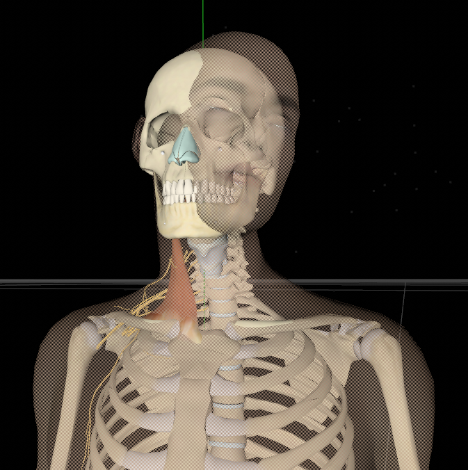 3D 新动画项目是关于局部麻醉 The new 3D animation project is about local anesthesia