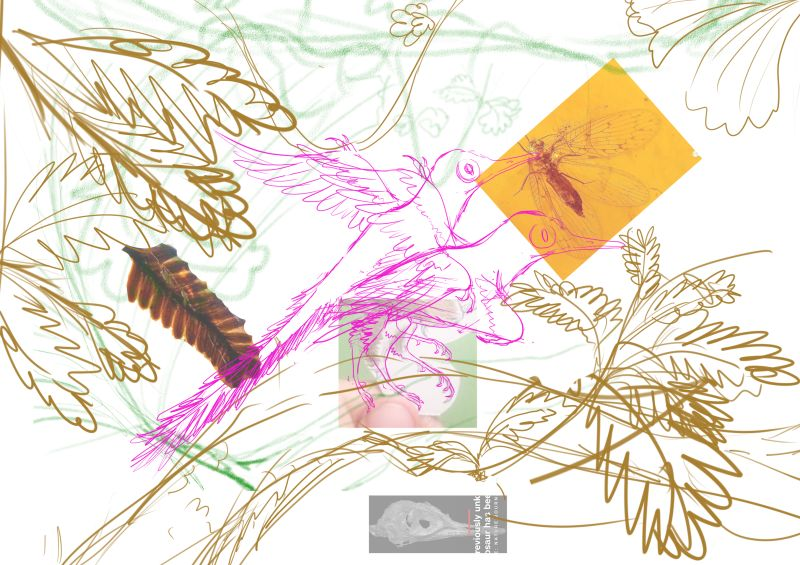 Oculudentavis 琥珀复原 眼齿鸟属的恐龙 设计稿草图 - 医学插画师-动画师-阿杜的原创生物医学可视化社团作品