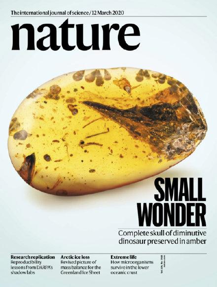 Nature 杂志上封面里的眼齿鸟 - 医学插画师-动画师-阿杜的原创生物医学可视化社团作品